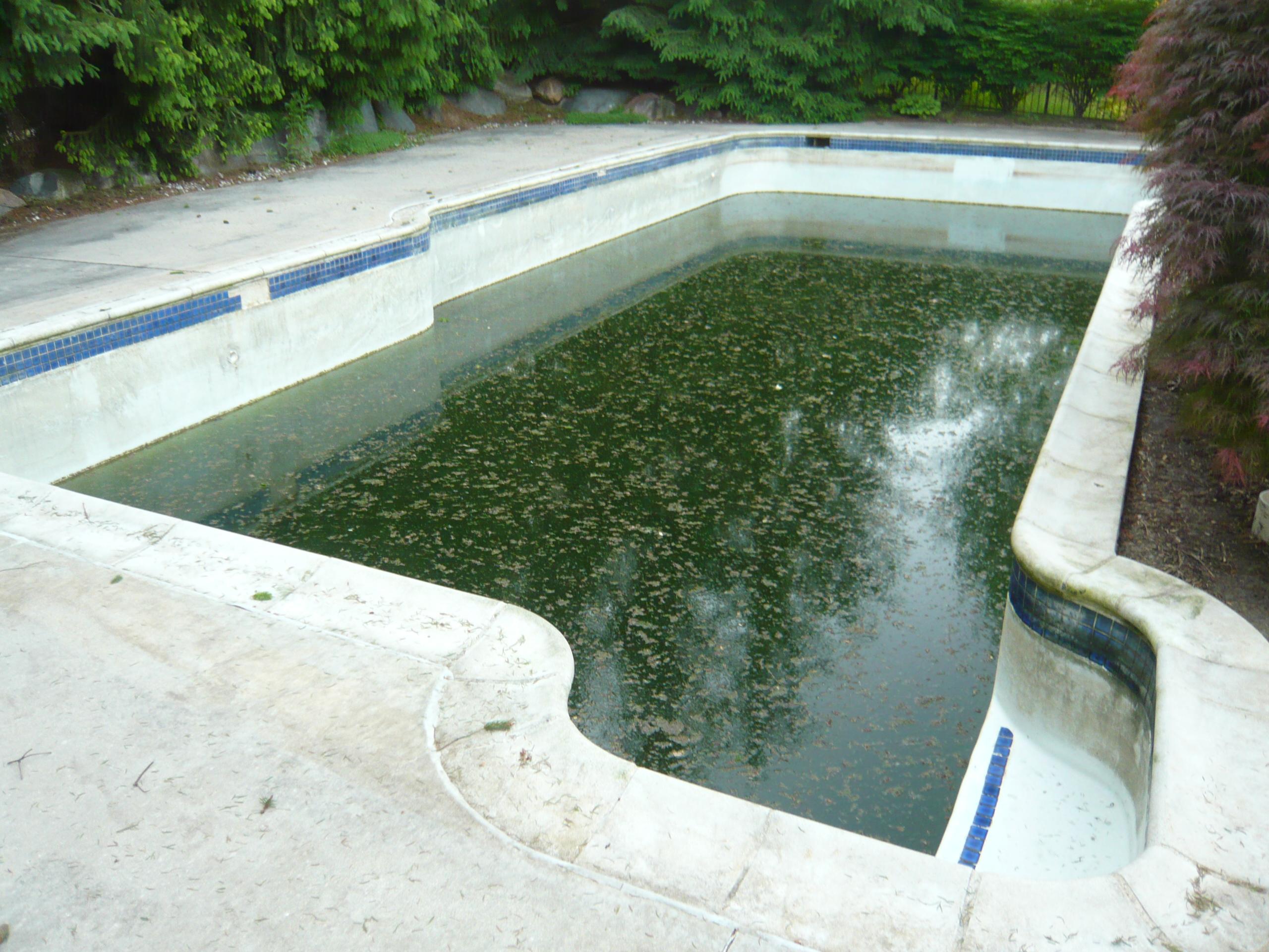 Acid Wash Gunite Pool : Here s a green gunite pool that could use an acid wash or