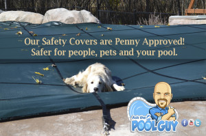 Safety Cover and Penny the dog